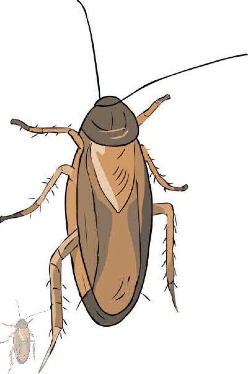 cropped-1302-roach-400.jpg