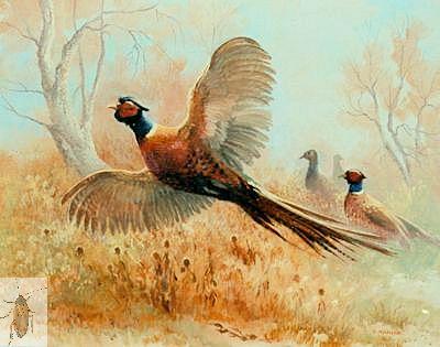 00012 Pheasant Country 20 x 24 (400)
