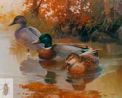 00018 Mallards in Autumn 16 x 20 (400)