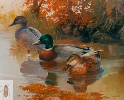 00018 Mallards in Autumn 16 x 20 (400)
