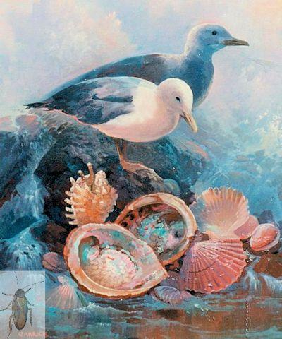 00025 Gulls and Shells 20 x 16 (400)