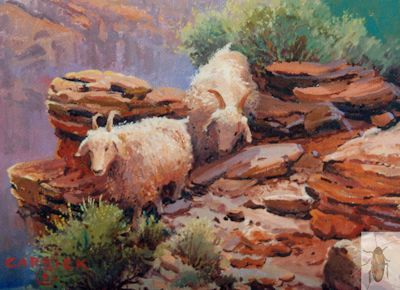 1164 Little Goats of Canyon de Chelly 5 x 7 (400)