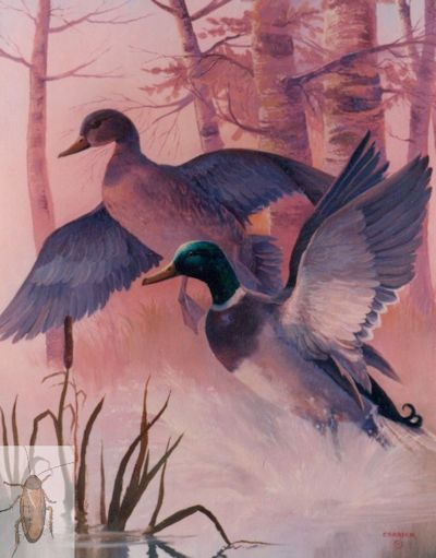 00053 Mallards at Dawn 24 x 30 (400)