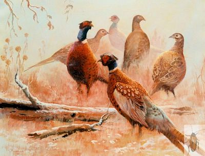 00057 Pheasants in Winter 24 x 30 (400)