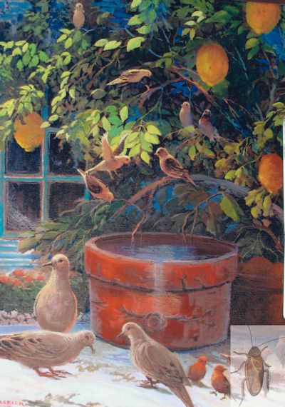 1238 Lemons and Birds 20 x 16 (400)