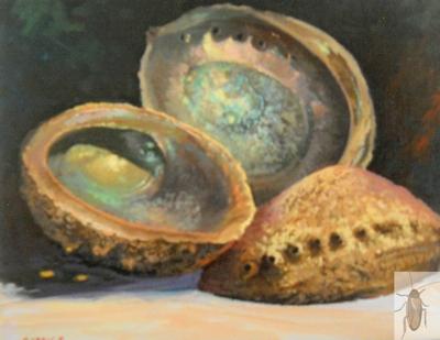 1459 Abalone Shells 11 x 14 A (400)