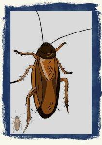 #KR0001.1z Stinkbug #3 10-05-2019 (400)