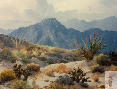 00136 Desert Vista 20 x 24 (400)