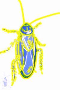 #SB0001.2d Stinkbug #6 06-16-2019 (400)