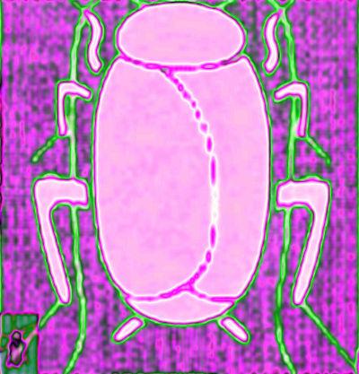 #BHCZ0001.2d Stinkbug #4 07-19-2019 (400)