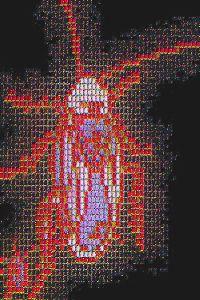 #VG0001.2f Stinkbug #6 07-13-2019 (400)