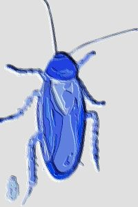 #CLT0001.2g Stinkbug #7 08-18-2019 (400)